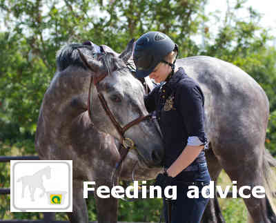 Hartog Feeding advice