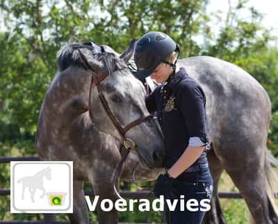 Voeradvies voor paarden