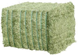 Grass for animal feed